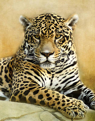 Photograph - Jaguar Portrait by TnBackroadsPhotos