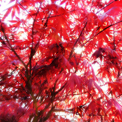 Digital Art - Japanese Maple by Matt Lindley