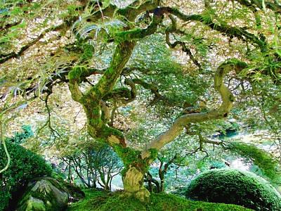 Photograph - Japanese Maple Tree by Athena Mckinzie