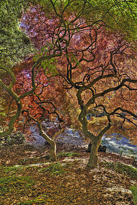 Photograph - Japanese Maples Trees by Jerry Gammon