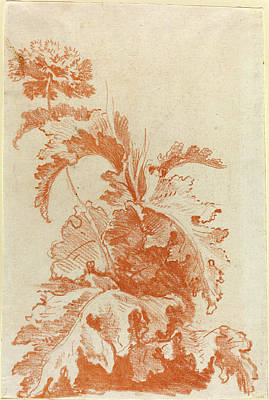 Red Poppies Drawing - Jean-baptiste Hüet, I, French 1745-1811 by Litz Collection