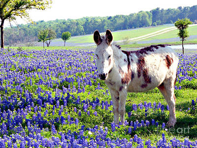 Jesus Donkey In Bluebonnets Art Print by Linda Cox