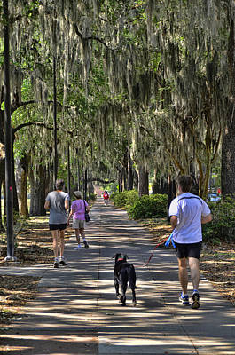 Photograph - Jogging Under The Oaks by Allen Beatty