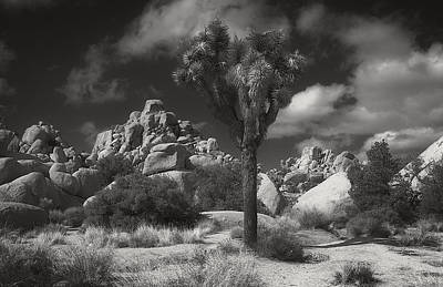 Photograph - Joshua Tree National Park by Sandra Selle Rodriguez