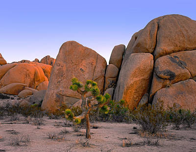 Photograph - Joshua Tree Dawn by Paul Breitkreuz