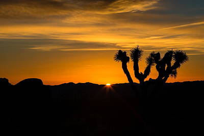 Photograph - Joshua Tree Sunrise  by Duncan Selby