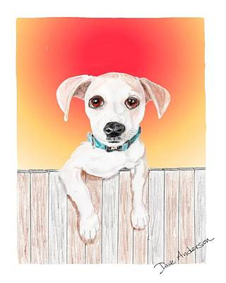 Animal Shelter Drawing - Juju - A Former Shelter Sweetie by Dave Anderson