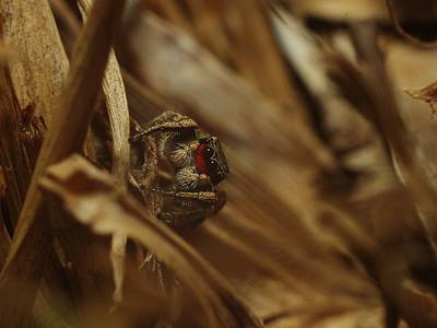 Photograph - Jumping Spider by Billy  Griffis Jr
