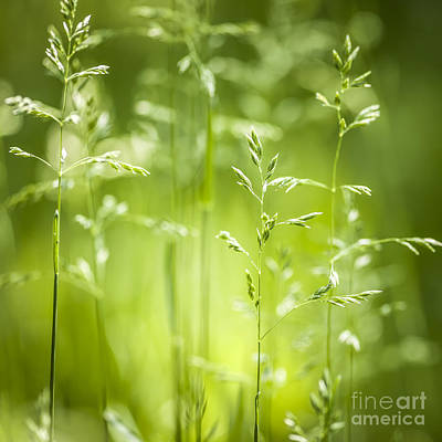 June Green Grass Flowering Art Print by Elena Elisseeva