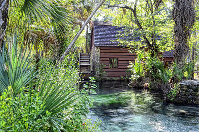 Juniper Springs Art Print by Bob Jackson