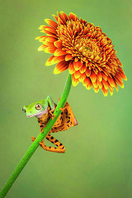 Amphibians Wall Art - Photograph - Just Hanging Around by Renee Doyle