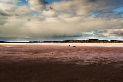 Photograph - Kangaroos On The Salt Flat by Joe Wigdahl