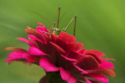 Photograph - Katydid by Christina Rollo
