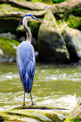 Blue Herron Photograph - Keeping Watch by Michelle Joseph-Long