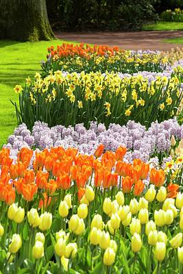 Garden Flowers Photograph - Keukenhof Gardens by Ashley Cooper