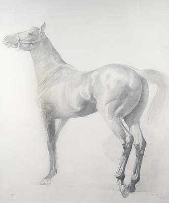 Equine Drawing - Kicking Off by Emma Kennaway