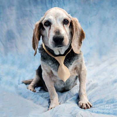 1-black And White Beach - Kippy Beagle Senior by Iris Richardson