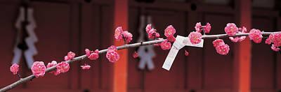 Contemplate Photograph - Kitano Tenmangu Kyoto Japan by Panoramic Images
