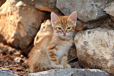 Photograph - Kitten In Hydra Island by George Atsametakis