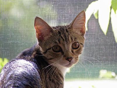 Dennis Miller Wall Art - Photograph - Kitten by Richard Dennis Miller