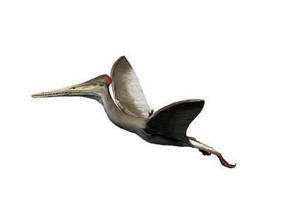 Grateful Dead - Kryptodrakon Is A Pterosaur by Nobumichi Tamura