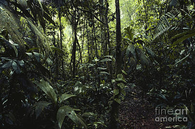 Interior Lowlands Photograph   La Selva, Costa Rica By Gregory G. Dimijian,  M.D.