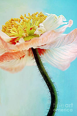 Painted Image Mixed Media - Lady Poppy by Angela Doelling AD DESIGN Photo and PhotoArt