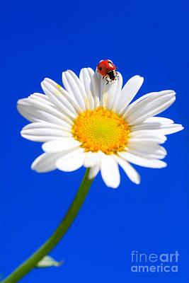 Ladybird On Flower Print by Patrick Frischknecht