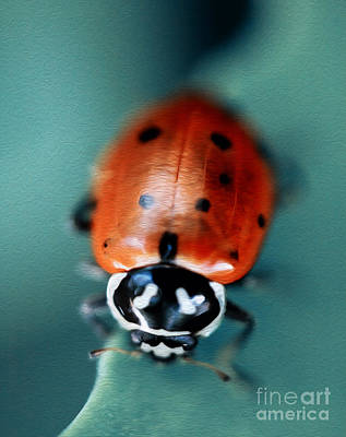 Photograph - Ladybug On Green Leaf by Iris Richardson