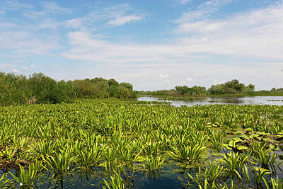Lake In The Danube Delta, Romania Art Print by Martin Zwick