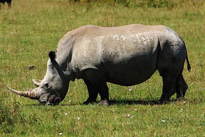 Lake Nakuru White Rhinoceros Art Print by Aidan Moran