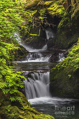 Photograph - Lake Quinault Creek by Sonya Lang