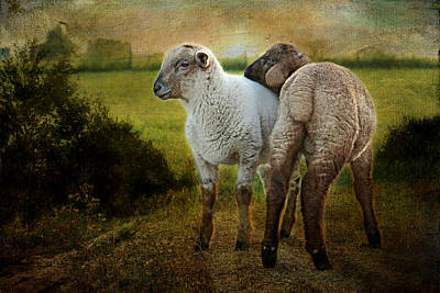 Domestic Animals Mixed Media - Lamb by Heike Hultsch