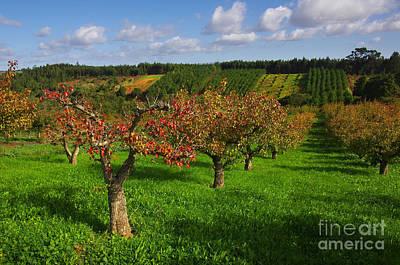 Tree Photograph - Landscape by Carlos Caetano