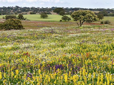 Alentejo Photograph - Landscape With Wildflower Meadow by Martin Zwick