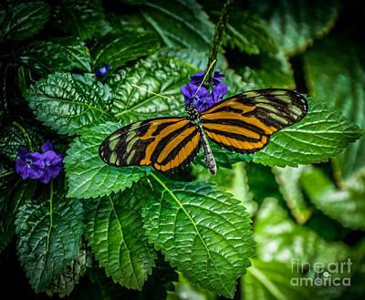Photograph - Large Tiger by Ronald Grogan