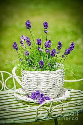 Flower Pot Photograph - Lavender by Amanda Elwell