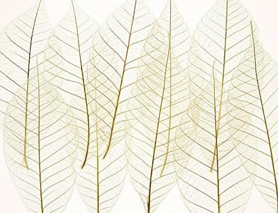 Layered Leaves Art Print by Kelly Redinger