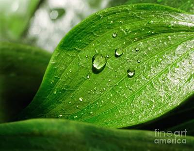 Photograph - Leaf And Water Droplets by Richard Kail