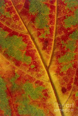 Photograph - Leaf Detail by Alan Sirulnikoff