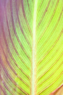Royalty-Free and Rights-Managed Images - Leaf detail by Tom Gowanlock