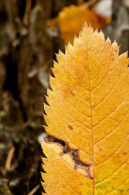 Catch Of The Day - Leaf by Elijah Weber