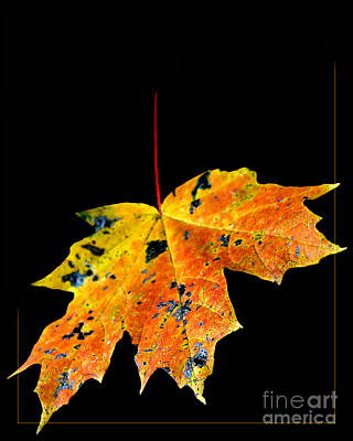 Photograph - Leaf by Michael Arend