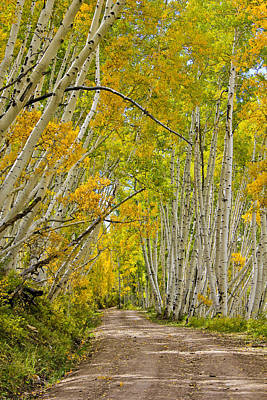 Photograph - Leaning Aspens by Marta Alfred