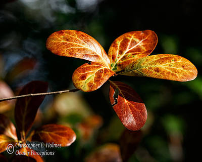 Photograph - Leaves by Christopher Holmes