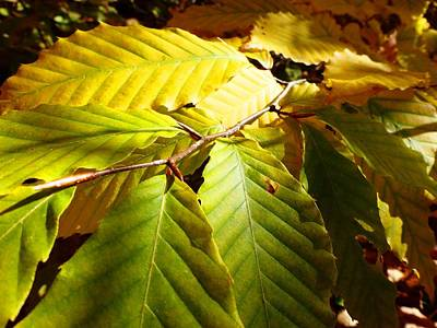 Photograph - Leaves by Cristina Stefan