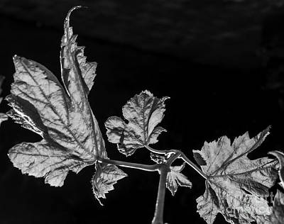 Photograph - Leaves by Michael Canning