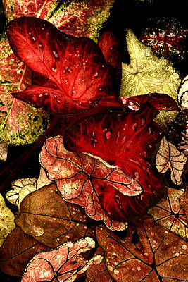 Photograph - Leaves by Paul W Faust -  Impressions of Light