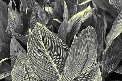 Photograph - Leaves by Sumit Mehndiratta