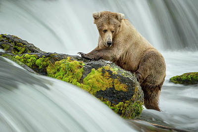 Brown Bear Photograph - Left Wanting by Renee Doyle